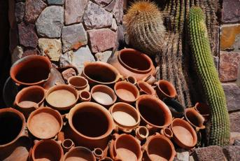 Cactus e vasos e terracota por todas as partes