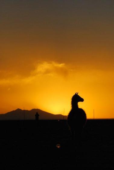 Por do sol com lhamas em Uyuni