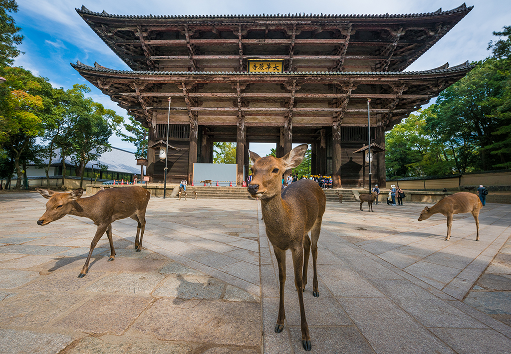nara-japan-deer-283.jpg